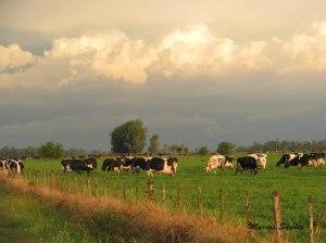 Pastoreando con la tormenta