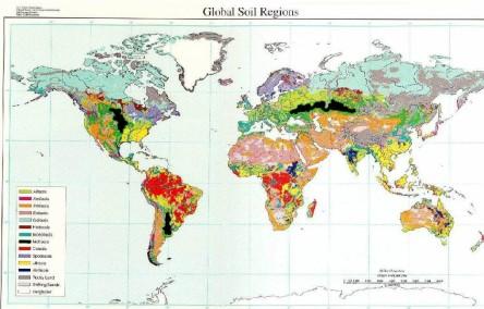 World Soil Map