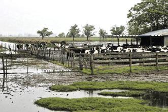 Tambos inundado 3