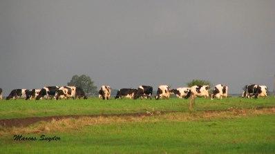 Pastoreando en la loma
