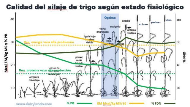 Estado trigo y calidad silaje