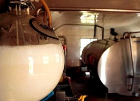 farm-milk-326681